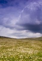 meadow, plain, flowers