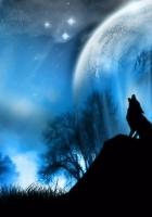 moonlight, wolf, fantasy