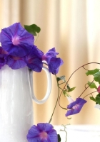 morning glory, roses, jugs