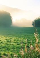 morning, house, fog
