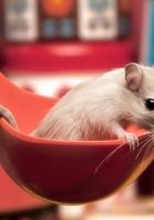 mouse, ladle, sitting