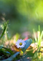 nature, plants, macro