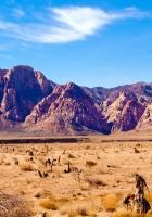 nevada, desert, vegetation