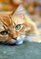opinion, cat, autumn