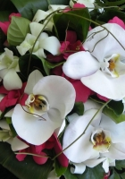 orchids, flowers, bouquet