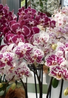 orchids, flowers, different