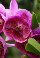 orchids, flowers, flowerbed