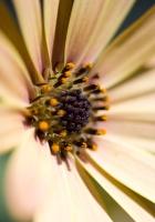 ower, petals, bright