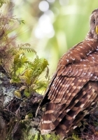 owl, grass, tree