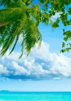 palm tree, coast, blue water