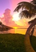 palm tree, decline, coast