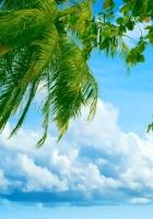 palm tree, leaves, sky