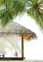 palm trees, arbor, girl