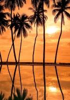 palm trees, decline, orange
