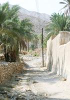 palm trees, road, wall