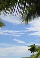 palm trees, sky, branches