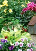 pansies, dahlias, daisies