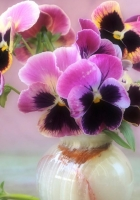 pansies, flowers, bouquet
