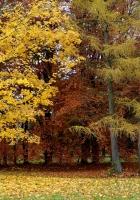 park, autumn, trees
