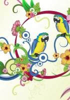 parrots, colorful, colors