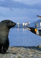 penguins, antarctica, seal