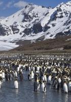penguins, set, mountains