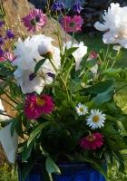 peonies, daisies, flowers