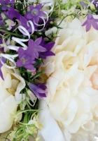 peonies, flowers, flowing
