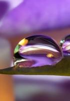 petals, flower, purple