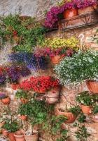 petunia, flowers, many
