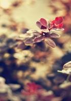 plant, background, dark