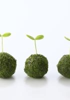 plant, green, ball