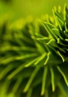plant, green, light