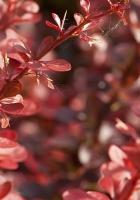 plants, grass, petals