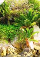 plants, rocks, grass