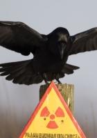plate, crow, warning