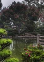 pond, garden, platform