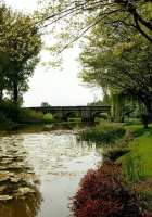 pond, water-lilies, trees