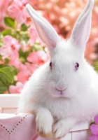 rabbit, colorful, sitting
