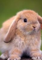 rabbit, tree stump, ears