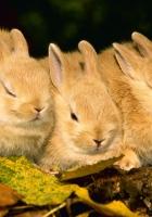 rabbits, three, sleep