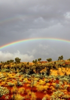 rainbow, bushes, wild west
