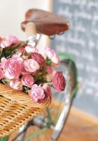 ranunkulyus, basket, flowers