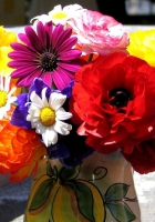ranunkulyus, daisies, flowers
