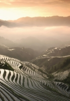 rice fields, mountains, fog