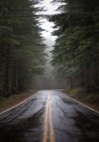 road, fog, nature