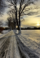 road, protector, winter