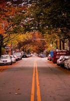 road, trees, cambridge