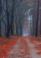 road, trees, walking paths