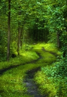 road, wood, thickets